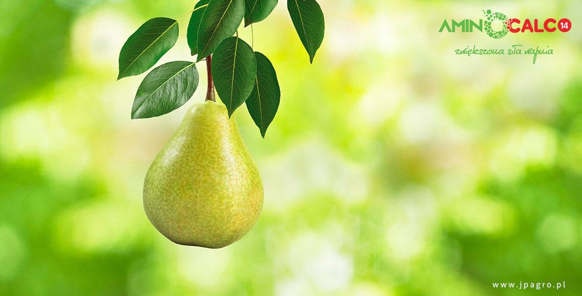 aminocalc14-jpagro-nawozy-wapniowe-sady-warzywa-aminokwasy2